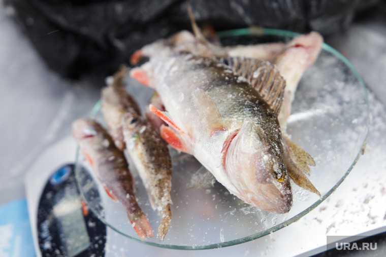 департамент АПК ЯНАО добыча ценных пород рыб квота 2021