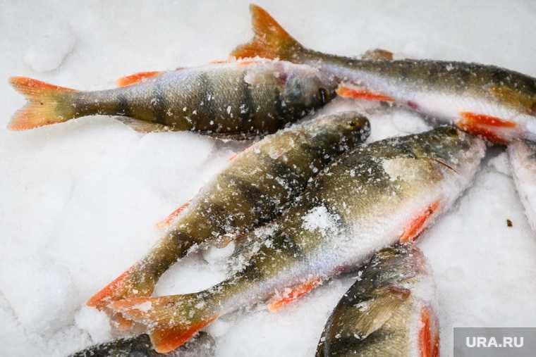 В ЯНАО массово гибнет рыба