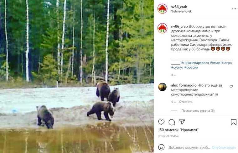 Медведи устроили пикник на даче в ХМАО. «Обожралась просто»
