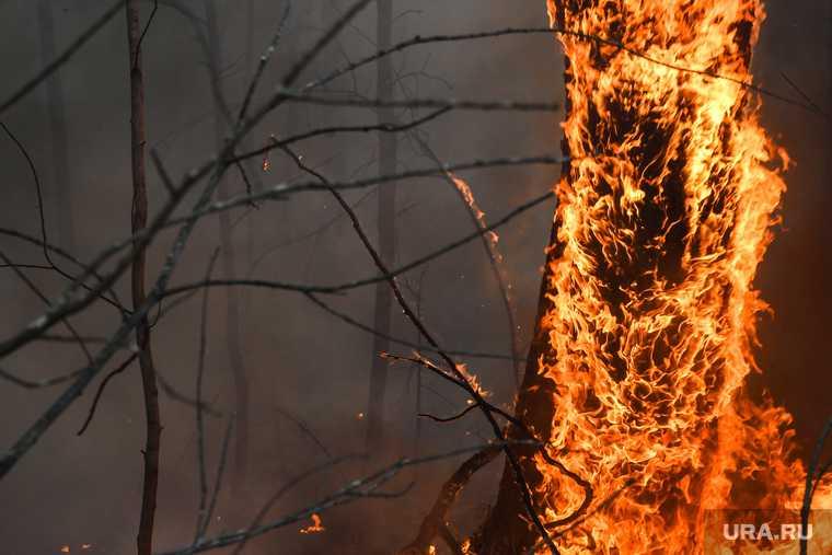 новости хмао пожар в югре хантах риск возникновения лесного пожара угроза ожидание синоптиков прогноз