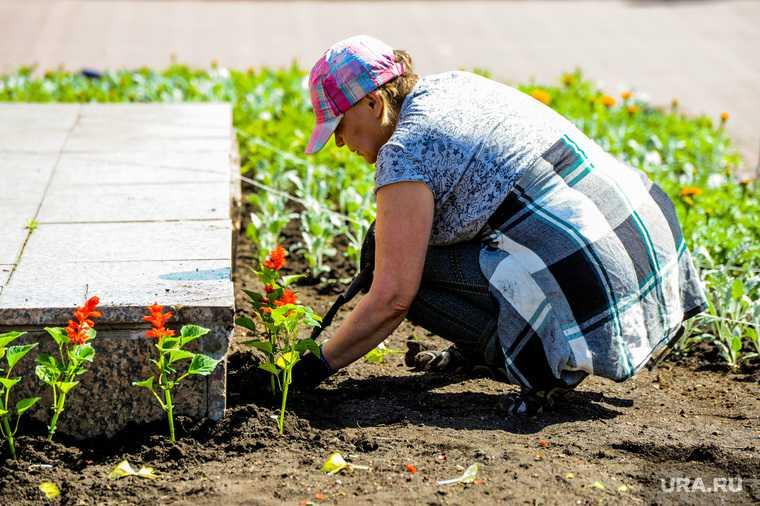 Челябинск озеленение высадка цветов приостановлена жара мэр Котова