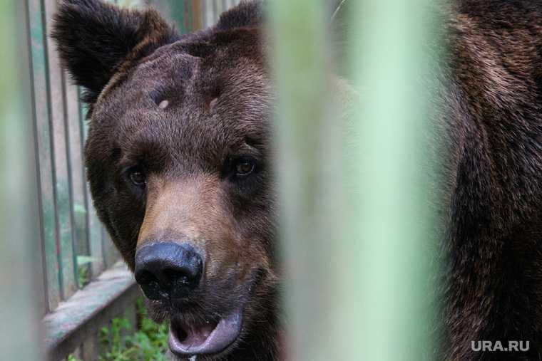выход медведей ЯНАО населенные пункты