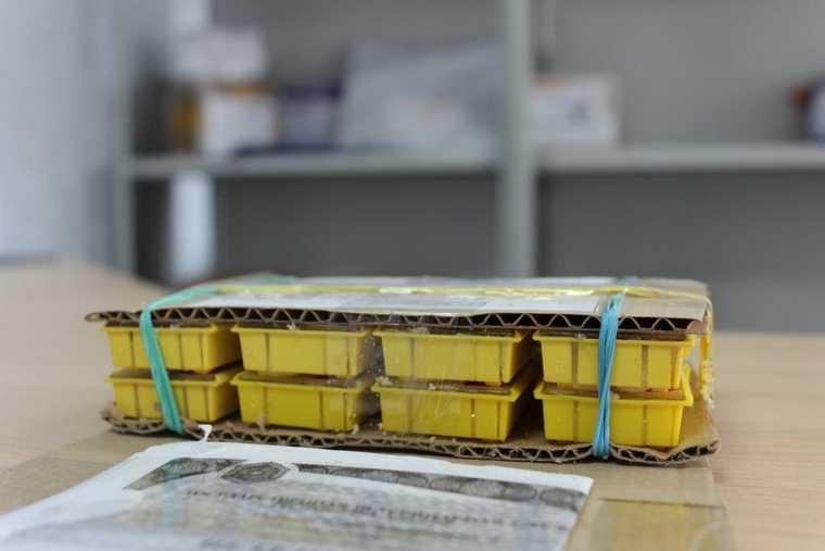 В Курганскую область пришла посылка с пчелами. Фото